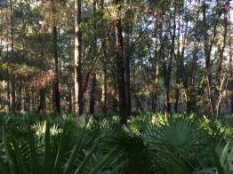 trees and palmettos