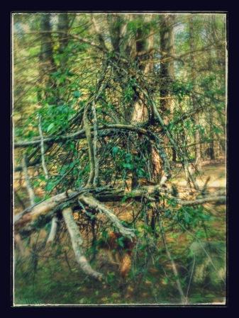 D tree